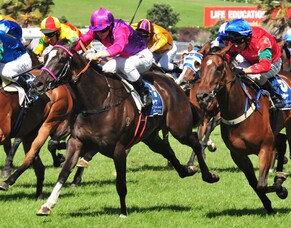 Summer Racing in Ellerslie